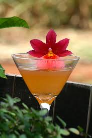 red martini splash recipes organic ocean vodka clean award winning vodka from