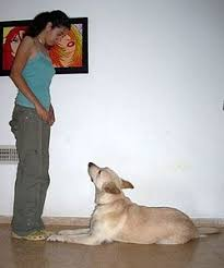 Training A Guide Dog For The Blind Dog Training Wikipedia