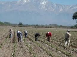 uatre nueva escala salarial para los trabajadores agrarios uatre logró casi un 30 de aumento para los trabajadores rurales