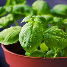 indoor herb garden the essentials all natural ideas