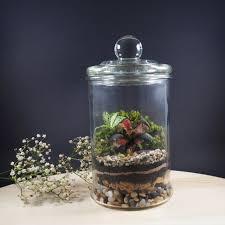 rainforest terrarium medium s19