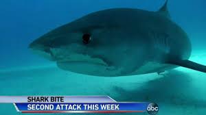 two kids lose limbs in u0027jaws like u0027 north carolina shark attacks