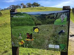 native plants and animals outstanding in the field views from north coast rangeland