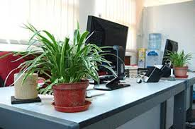 plant on desk green home decor that cleans the air top eco friendly house