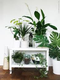 home interior plants so about what i said home indoor plants home