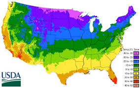 us climate map grey duck garlic garlic planting chart