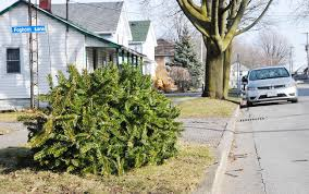 Christmas Tree Pick Up Minor Hockey Team Will Pick Up Christmas Trees The Kingston Whig