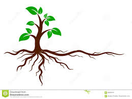 green tree with roots stock vector image 89206761