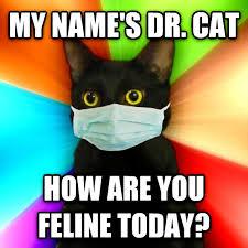 Cat Meme Maker - livememe com