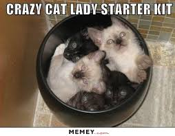 Funny Cat Lady Memes - crazy cat lady memes funny crazy cat lady pictures memey com