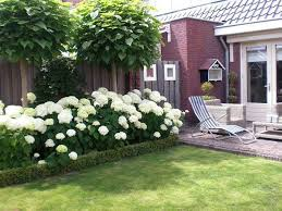backyard with white hydrangeas stunning hydrangea garden plants
