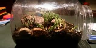 eternal terrarium with ant colony inside 4 steps with pictures
