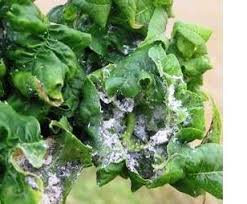 a list from a z of common garden pests check these out if you