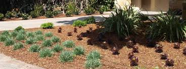 Drought Tolerant Landscaping Ideas Lose The Lawn Drought Tolerant Landscape Design With Drought