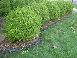 Home Decor Louisville Ky How To Install Plastic Landscape Edging Utah Garden Blogs Top Of