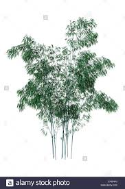 3d digital render of greeen bamboo trees isolated on white
