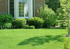 cura giardino mantenere verde il prato consigli per curare l erba giardino