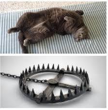 Cat Trap Meme - truth imgur
