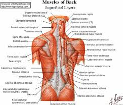 Lower Back Pain Bench Press Best 25 Mid Back Pain Ideas On Pinterest Mid Back Exercises