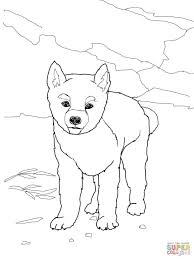 free download dingo puppy coloring page animal pictures of