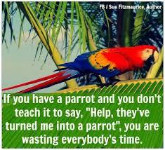 206 best parrot fan alia images on pinterest pet birds