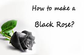 Where Can I Make A How To Make A Black Rose Where Can I Get Black Roses Youtube