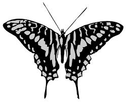grey butterfly clip 17