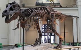 picture of a halloween skeleton sue dinosaur wikipedia