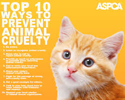 prevention of animal cruelty month playful kitty
