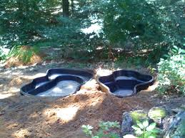 backyard catfish farming how to start a homestead or commercial