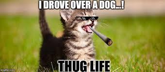 Memes Cat - top 26 thug life cat memes thug life meme