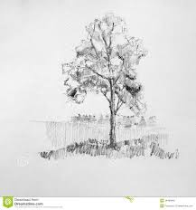 tree sketch royalty free stock images image 34469849