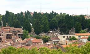 Define Tree Cupressus Sempervirens Toulouse France Cemetary Jpg