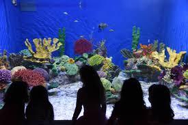 rio de janeiro marine aquarium aquario visit rio
