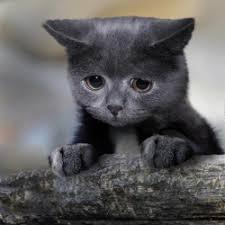Cat Memes Generator - confession cat meme generator