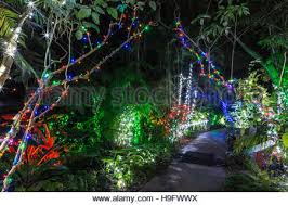 christmas lights san diego san diego botanic gardens xmas lights california stock photo