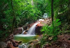tropical rainforest native plants wild jungle forest and scenery waterfall cascade with tropical