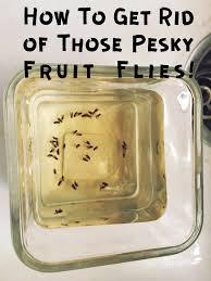 How To Keep Footprints Off Laminate Floors How To Get Rid Of Fruit Flies Honeysuckle Footprints