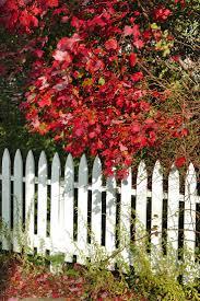 73 best white picket fence images on pinterest white picket