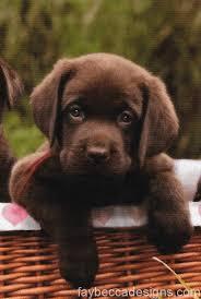 labrador puppy chocolates valentines u2013 fay becca designs