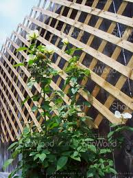 medium diagonal trellis 7 x 7 fences trellises wooden panel