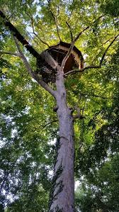 chambre d hote cabane dans les arbres cabane dans les arbres nid d aigle