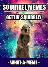 Squirrel Meme - memes squirrel memes the most hilarious squirrel meme compilation