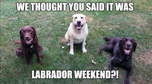 Labor Day Meme - we thought you said it was labrador weekend imgflip