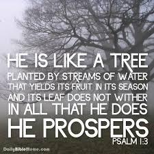 Daily Bible Meme - psalm 1 1 3 steemit