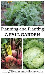 planning and planting a fall garden homestead honey