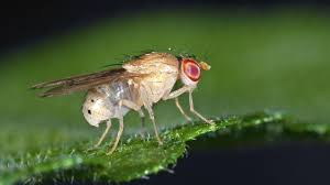 better smelling beer thanks to fruit flies science aaas