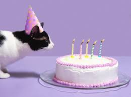 pictures of cat birthday cakes cat wearing birthday hat blowing