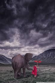 apple wallpaper elephant elephant child monk field storm clouds 4k hd desktop wallpaper