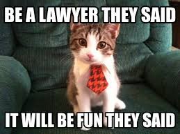 Lawyer Cat Meme - download lawyer meme super grove
